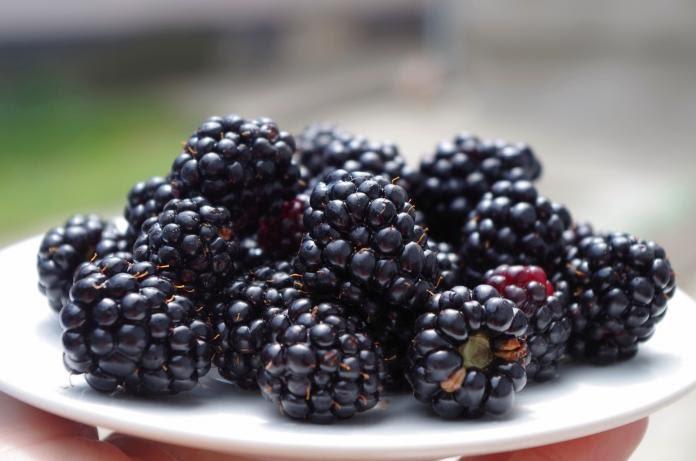 For the Ladies, 8 Reasons You Should Eat Blackberries